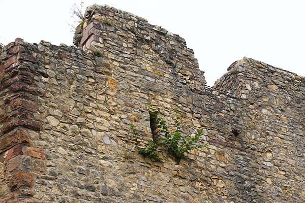 Burg-Roetteln-202.jpg