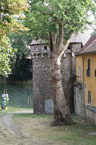 Burgruine-Giebichenstein-4.jpg