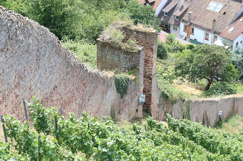 Burgruine-Clingenburg-7.jpg