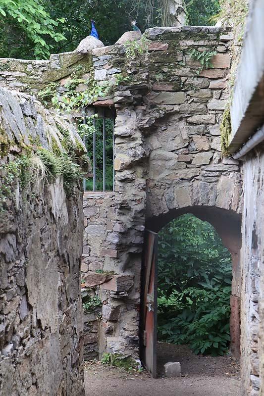Klosterruine-Heilig-Grab-9.jpg