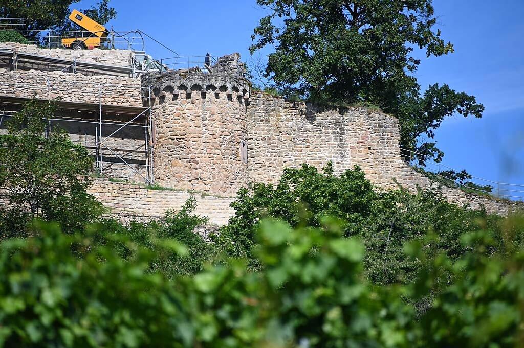 Wachenheim-8.jpg