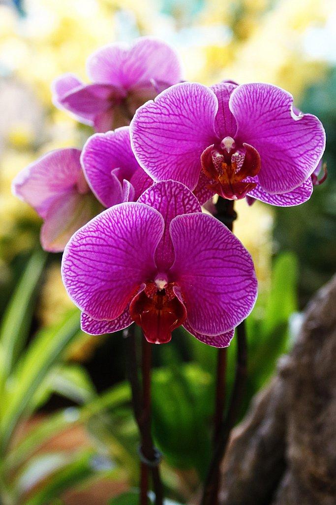 Orchideen-16.JPG